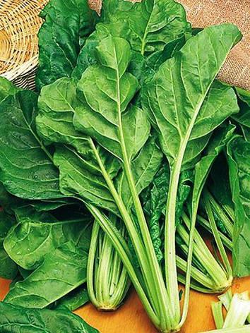 Семена свеклы листовой Мангольд зелёный, фото 2