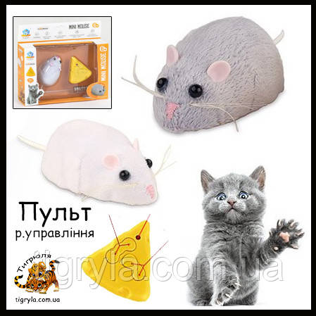 Мышка на управлении с пультом  Поймай мышку Кошки-Мышки