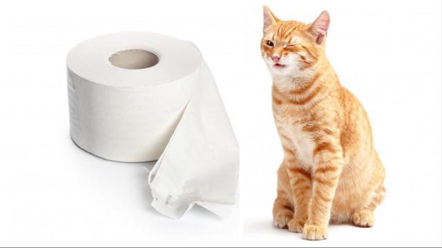 Наповнювачі для котячих туалетів