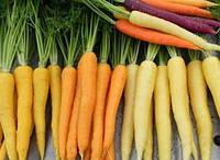 Морковная радуга 2