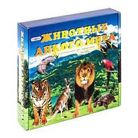 """Игра с карточками """"Животные дикого мира"""" настольная игра в коробке 686 25,5*25*5 (2525)"""