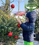 Picea Omorika, Ялина сербська,80-100см,CWRB15 - ком/сітка/горщ. 15л, фото 2