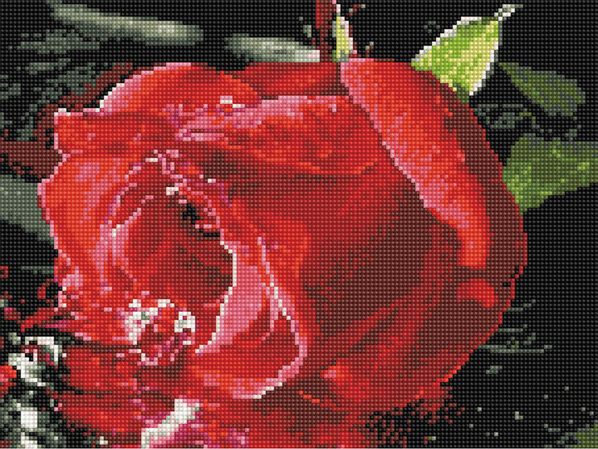 Алмазная вышивка (мозаика) 30x40 см Красная роза Rainbow Art