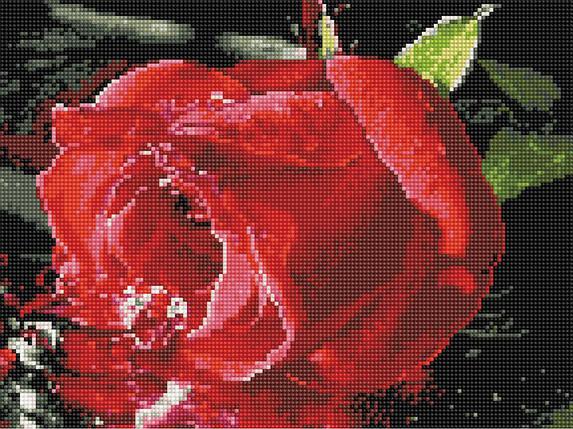 Алмазна вишивка (мозаїка) 30x40 см Червона троянда Rainbow Art, фото 2
