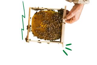 Товари для бджоляра