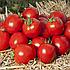 Асвон F1 томат детерм. 5тис.нас., Kitano Seeds, фото 3