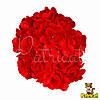 Камелия цветок красный на стебельке 1.5 см диаметр 10 шт/уп
