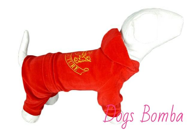 Велюровый костюм Джуси для собак DogsBomba