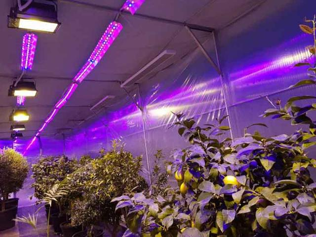 Ультрафиолетовая лампа для растений