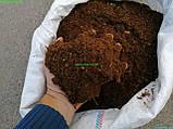 Грунт для клумбы Грунт для теплицы Торф Земля для цветника, фото 4