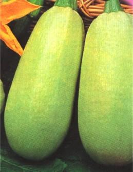 Семена кабачков Грибовский, фото 2