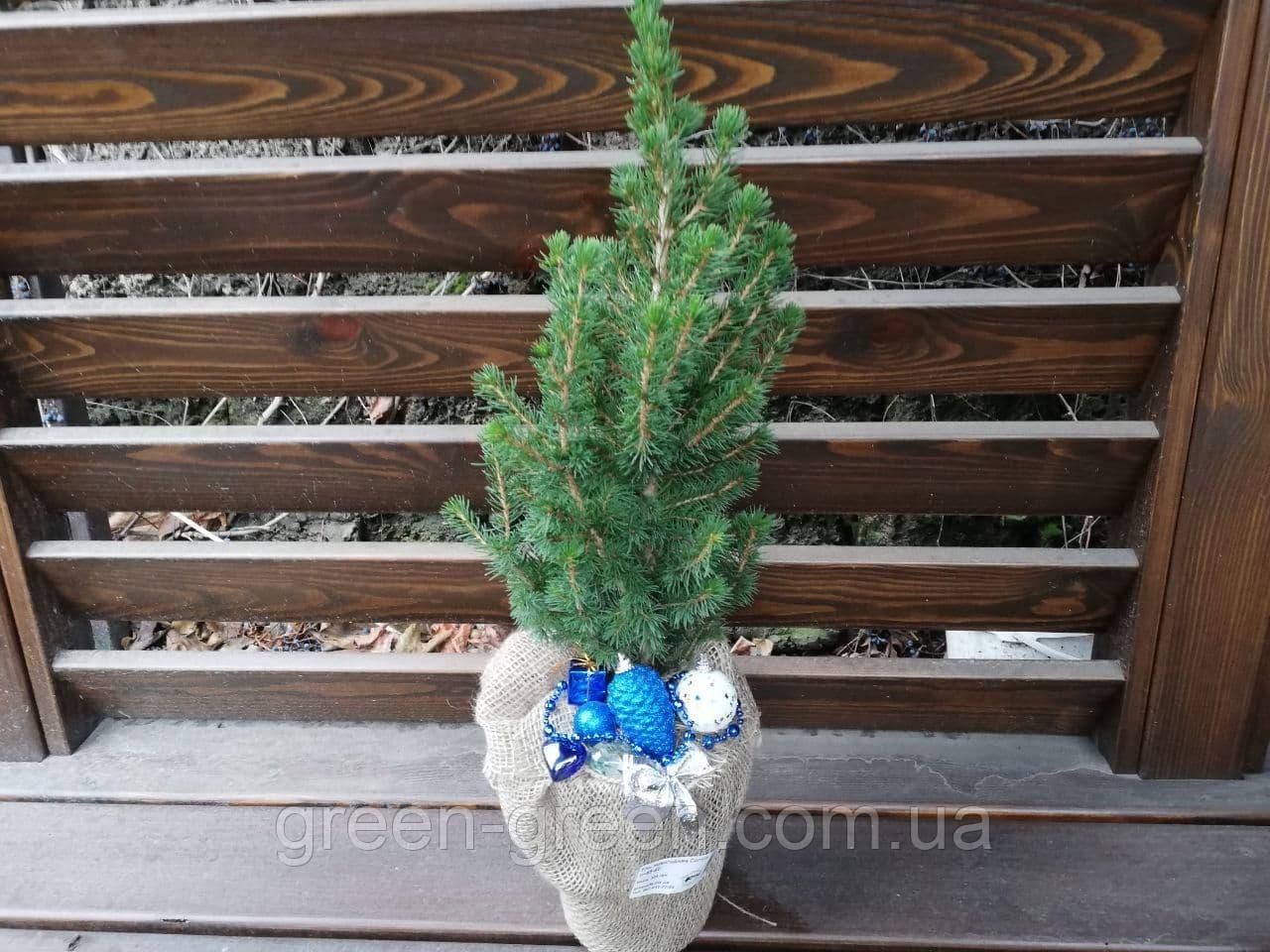 Ель новогодняя, синий декор, h=60см.