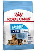 Royal Canin Maxi Starter, корм для беременных/кормящих сук крупных пород, и щенков до 2 мес., 15 кг