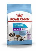 Royal Canin Giant Starter, корм для беременных/кормящих сук гигантских пород, и щенков до 2 мес., 15 кг