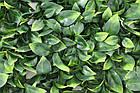 Декоративне зелене покриття Самшит молодий 50х50 см GCK-05, фото 2