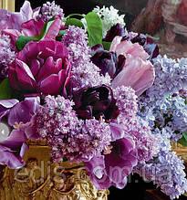 Набір цибулин квітів Бузок 7 цибулин тюльпанів