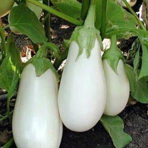 Семена баклажана Бибо F1, 20 семян — очень ранний с уникальной белой окраской плодов Seminis, фото 2
