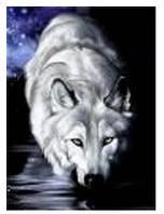 """Картина по номерам """"Волк"""" 40*50см,крас.-акрил,кисть-3шт в коробке"""
