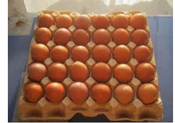 Редбро инкубационное яйцо Венгрия