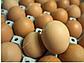 Яйцо бройлера Чехия инкубационное, фото 2