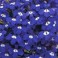 Семена Лобелия кустовая Ривьера Синяя с глазком 200 мультидраже Pan American