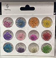 Набір сухоцвітів для дизайну нігтів, 12 шт в прозорій тарі