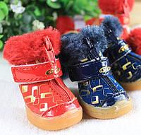 Ботинки для собак GO-GO (Зима) NEW. Обувь для собак.