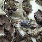 Халат женский на запах с капюшоном из Well Soft, Украина, р 46, цвета в ассортименте, 20038809, фото 4