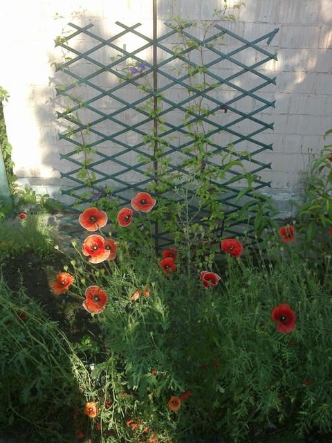 Садові решітки пластикові опори для рослин перголи