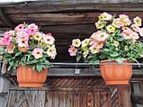 Дебонейр семена петунии 100 шт Pan American Dusty Rose, фото 2