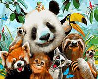 Картина по номерам Животные Селфи жителей джунглей 40х50см Babylon Turbo