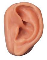 Модель уха для акупунктуры, левое