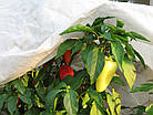 Агроволокно на метраж 23 белый 9,5 м Усиленный край, фото 6