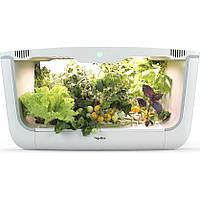 Гидропонная установка для выращивания растений / проращиватель Vegebox BioChef Home Box