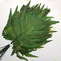 Папороть Перо, фото 1