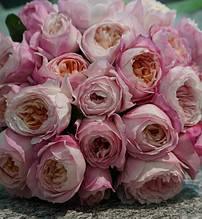 "Троянда ""Constance"""