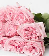 """Троянда """"Pink O'Hara"""""""