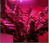 LED фитолампа для растений с полным спектром - 5 LED/ 220В., фото 7