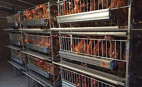 """Промислово-побутовий фільтр """"під фланець з сепаратором вологи FSU для курячих ферм, фото 2"""