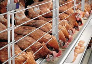 """Промышленно-бытовой фильтр """"под фланец"""" FSU для куриных ферм, фото 2"""