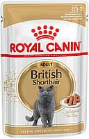 Royal Canin British Shorthair Adult Влажный корм для кошек породы Британская короткошерстная 85 г