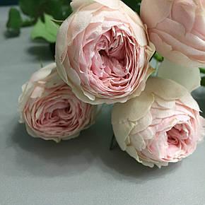 Роза Менсфилд Парк (Mansfield Park) спрей, фото 2