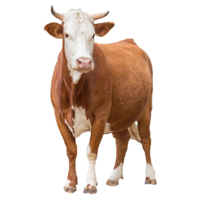 Обладнання та інструменти для скотарства
