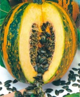 Семена тыквы Голосеменная Южная, фото 2