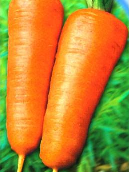 Насіння моркви Шансон Роял