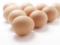 Инкубационное яйцо бройлера кобб 500 Украина