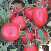 Міцено насіння низькорослої сливки Syngenta Голландія 10 шт