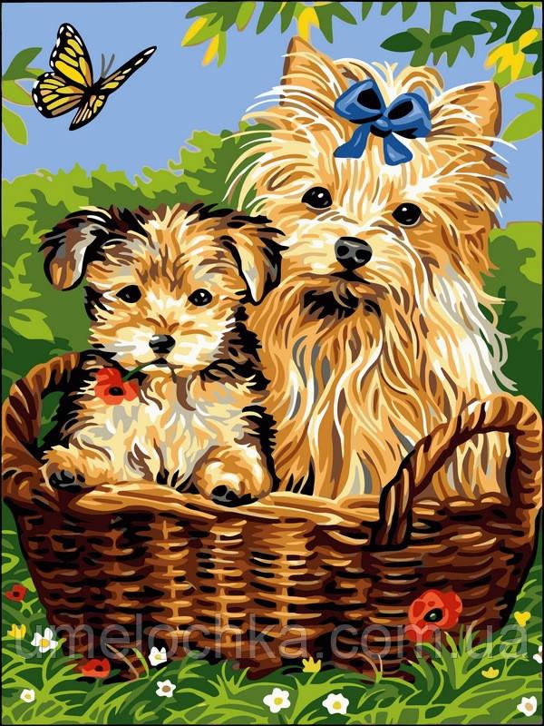 Картина-раскраска Турбо Йорки в корзинке (VK105) 30 х 40 см