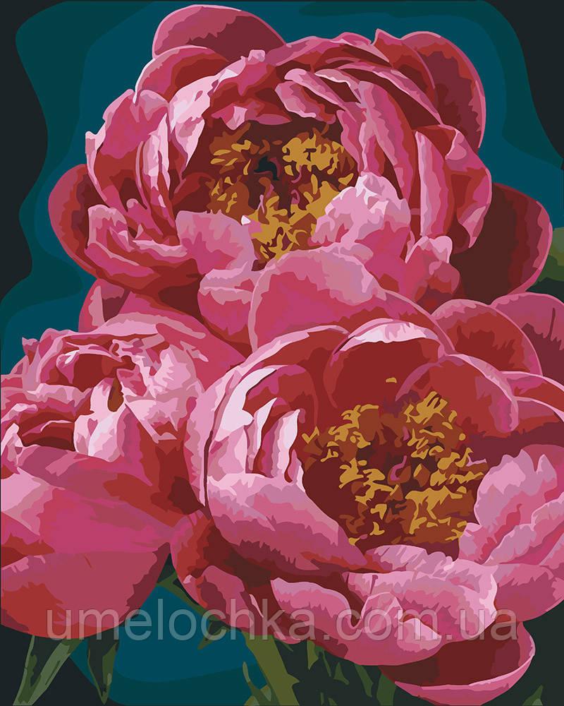 Картина раскраска Пышные пионы (KH3044) 40 х 50 см Идейка
