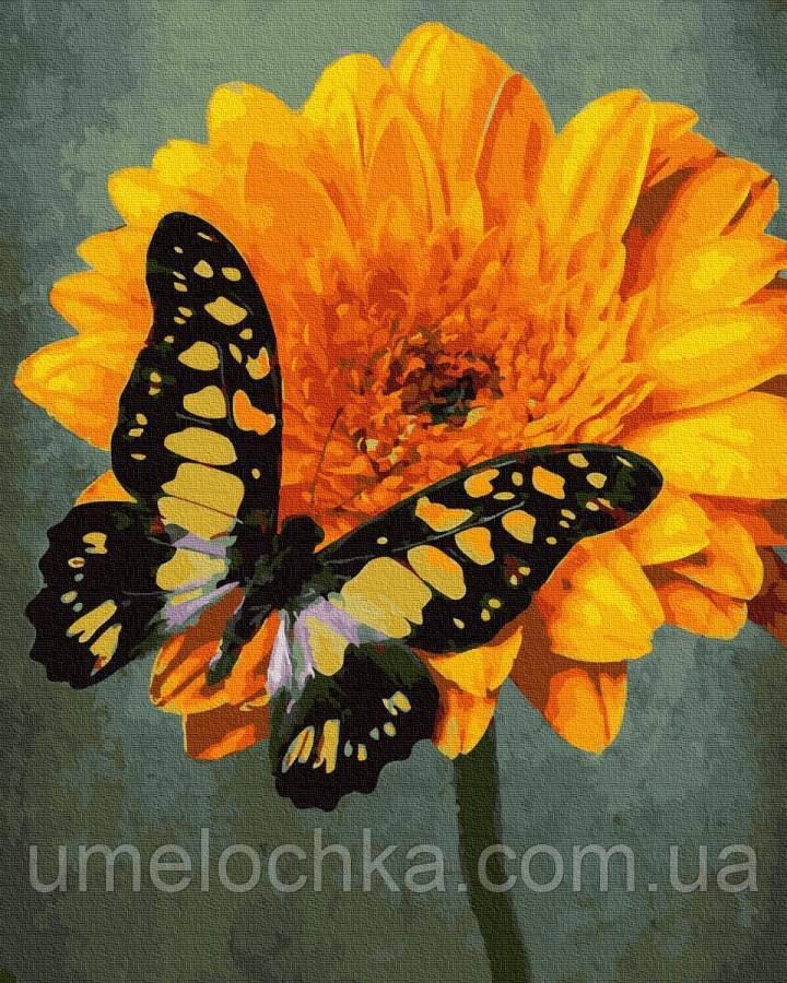 Картина по номерам  Жёлтый махаон (BRM30138) 40 х 50 см
